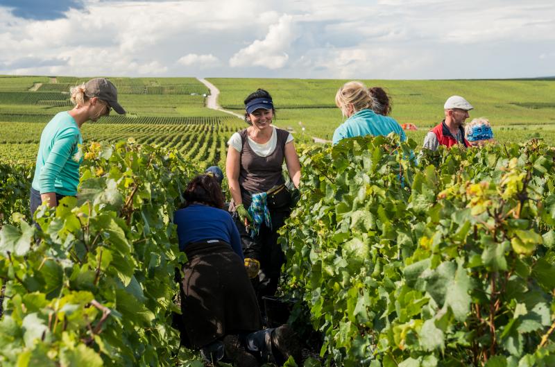 Rencontre avec un vigneron dans les vignes en Champagne - Les Escapades du Viateur